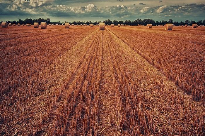 Pšenica a jej spracovanie